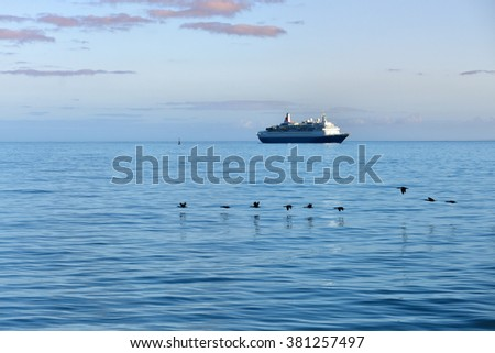 Flock of the Cape cormorants or Cape shag (Phalacrocorax capensis) in Luderitz bay and luxury cruise ship on background at sunrise