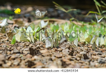 Flocks of butterflies live in the forest, soft focus image.