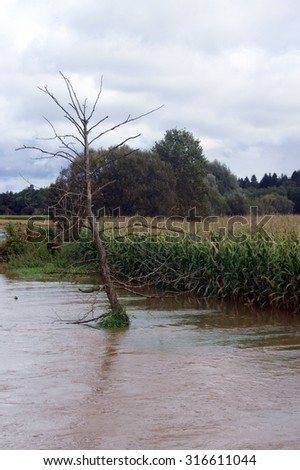 Flooded corn field with dried tree - stock photo