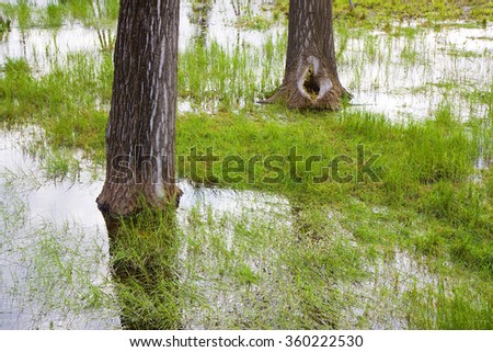 Flooded fields after torrential rain - tree trunks in the foreground - stock photo