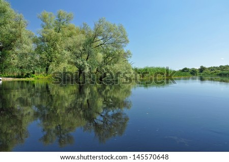 Flooded forest in the Danube delta