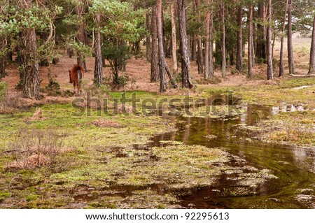 Flooded forest landscape with wild New Forest pony at edge of trees - stock photo