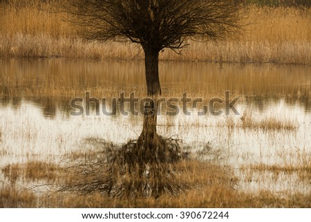 flooded spring forest. Beautiful lake in the forest. Single tree in flooded forest. Beautiful landscape. Water in forest.
