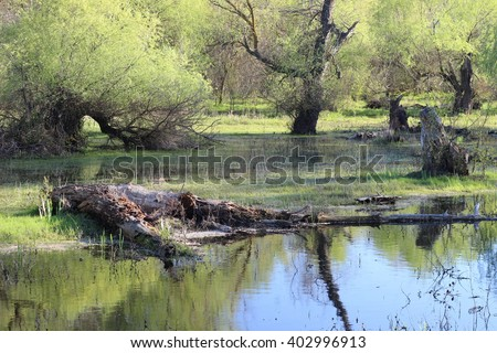 Flooded trees during high water in Danube river in early spring