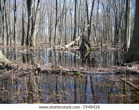 Flooded Woodlands - stock photo