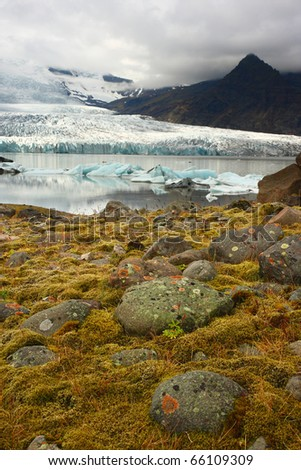 Flora under melting glacier, Vatnajokull glacier, Iceland - stock photo
