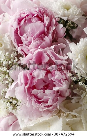 Floral arrangement with pink peonies, white hortensia, chrysanthemums and gypsophila paniculata twigs. - stock photo