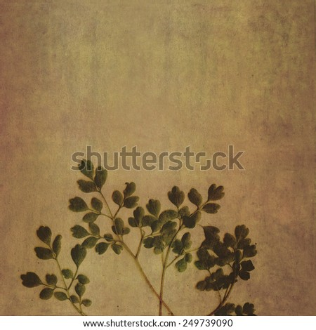 Floral background and design element - stock photo