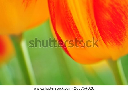 Floral background, flora nature close up - stock photo