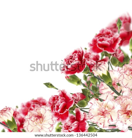 Floral background from fresh carnations - stock photo