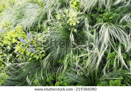 floral background, garden flowerbed with flowers and grass, horizontal - stock photo