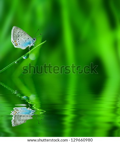 Floral background. Grass with dew drops and butterfly reflected in water. - stock photo