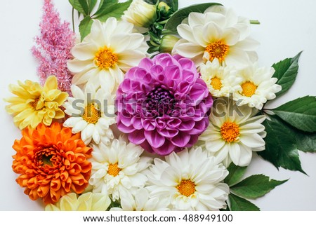 floral background of dahlias