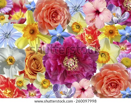 floral background of isolated colorful blossoms - stock photo