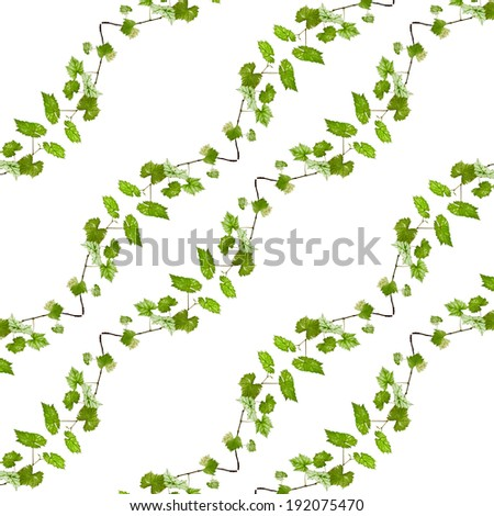 Floral background of natural green branch with copy space for text isolated on white background - stock photo