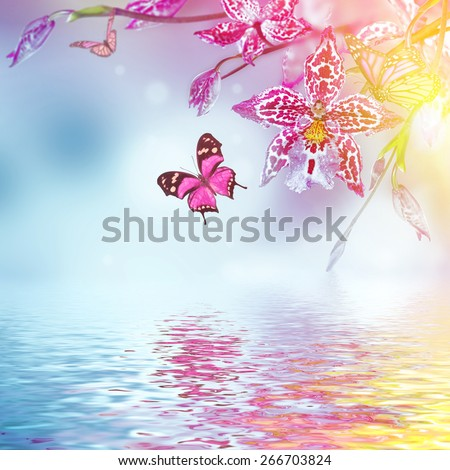Floral background of tropical orchids, butterfly - stock photo