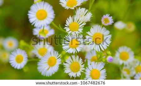 stock-photo-floral-background-of-wild-pu