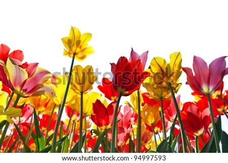 Floral Background. On a white background.