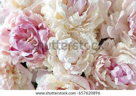 Floral background pink white peonies pattern stock photo royalty floral background pink and white peonies pattern bouquet of peonies flower light texture mightylinksfo