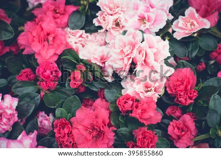 Floral background, red and pink flowers - stock photo