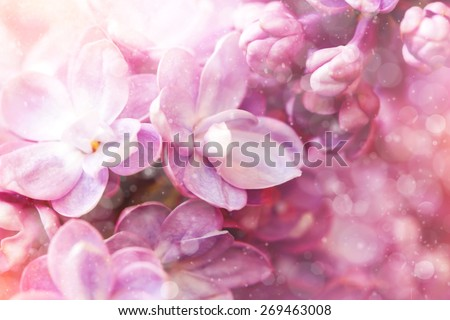 floral background with cute lilac flowers - stock photo