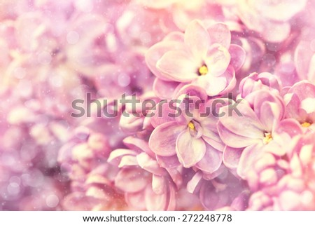 floral background with delicate lilac flowers - stock photo