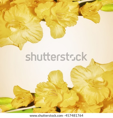 Floral background with yellow flowers gladiolus - stock photo