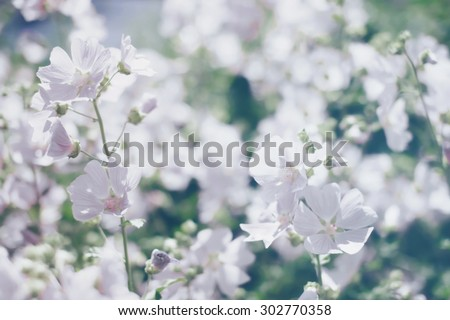 Floral blurred background, spring white flowers defocused photo - stock photo