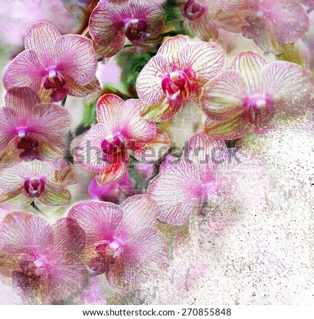 Floral card with lilas striped orchid flowers on grunge stained hazy background                         - stock photo