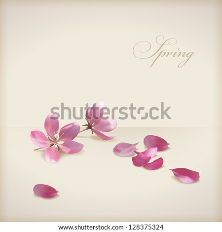Floral cherry blossom flowers spring design. Pink flowers, freshly fallen petals and text 'Spring' on a beige background. Can be used as wedding, greeting, invitation card. Vector file in my portfolio - stock photo