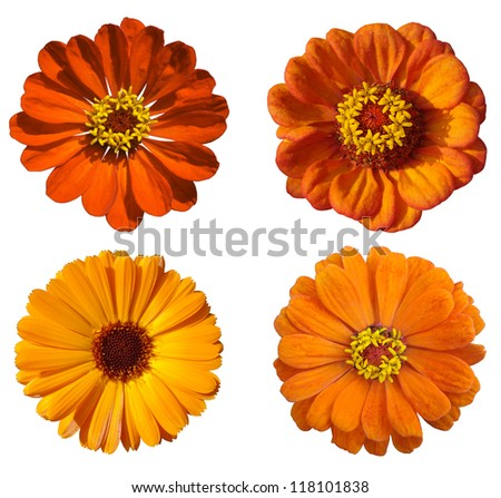 floral collage with orange flowers - stock photo