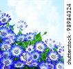 Floral daisy border, fresh spring blue blooming flowers over sky background, wildflowers field, natural plant glade, fresh meadow - stock photo