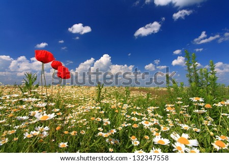 Floral field under the blue sky and white clouds in the summer - stock photo