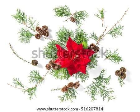 Floral flat lay. Red Christmas flower poinsettia and thuja branches on white background