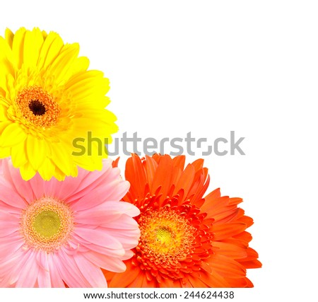 Floral frame: gerber flowers isolated on white background - stock photo