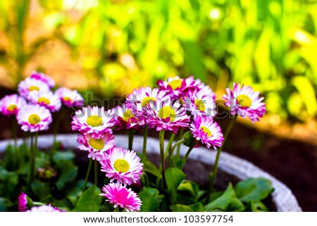 floral series.floral background of daisies