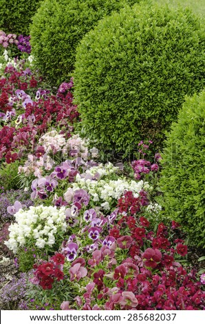 Floral synergy in spring: Border of pansies and other decorative short flowers arranged by green shrubs in a formal garden
