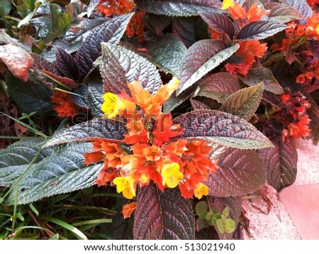 Floral big green purple leaves bunch stock photo edit now floral with big green and purple leaves bunch of orange and yellow flowers mightylinksfo