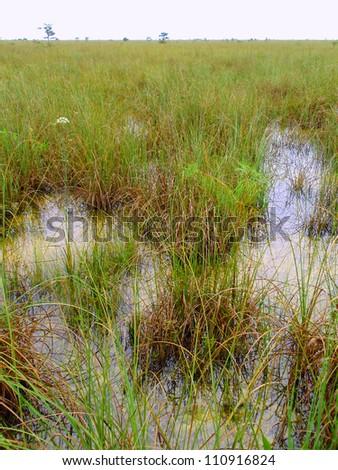 Florida Everglades, Everglades National Park, Florida, USA - stock photo