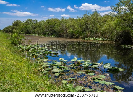 Florida Everglades View at Shark Valley showing Canal and Lily Pads - stock photo
