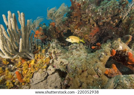 Florida Keys Underwater Reef - stock photo