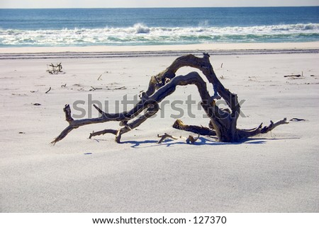 Florida Paradise - single branch on the beach (exclusive at shutterstock) - stock photo
