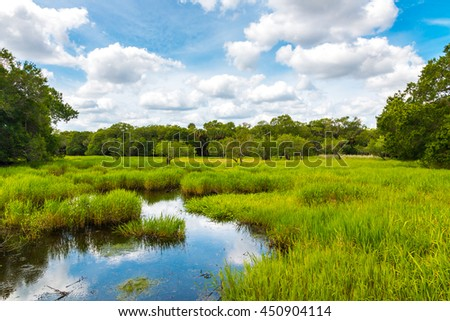 Florida wetland, natural landscape. - stock photo