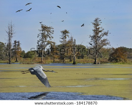 Florida Wetlands In Winter Time .Circle B Bar Reserve. - stock photo