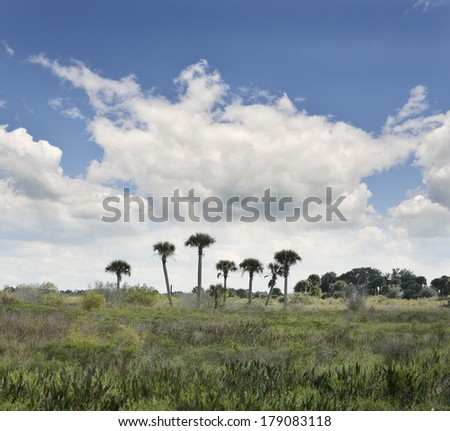 Florida Wetlands Landscape With A Beautiful Sky