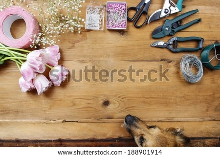 Florist workplace: dog looking at flowers and accessories. Top view - stock photo