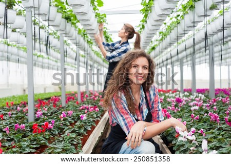 Florists woman working with flowers in a greenhouse.