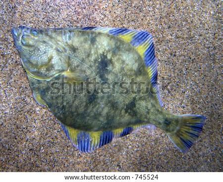 Heather l jones 39 s portfolio on shutterstock for Fische arten