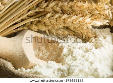 Flour in burlap bag and wheat ears - stock photo