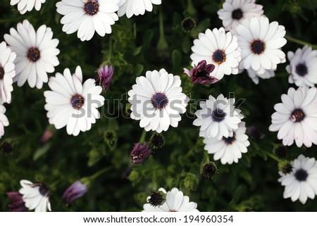 flower 14 - stock photo